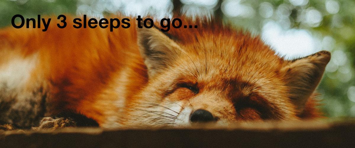 Sleeping fox.
